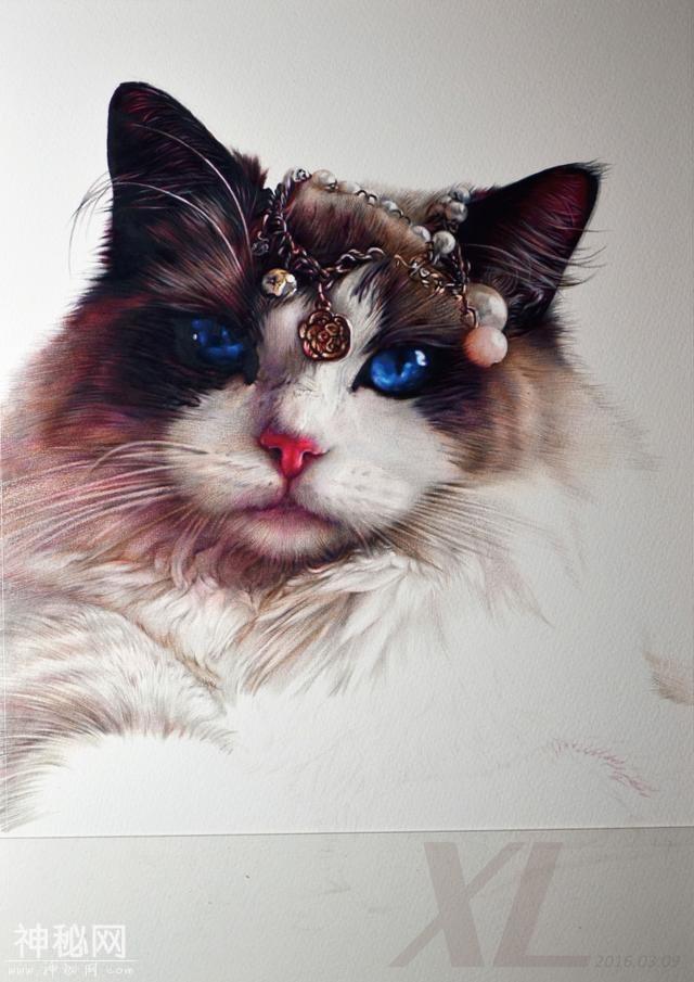 祥雷老师的超写实彩铅动物《布偶猫》,附彩铅教程步骤